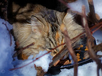Feeding feral cat in the snow