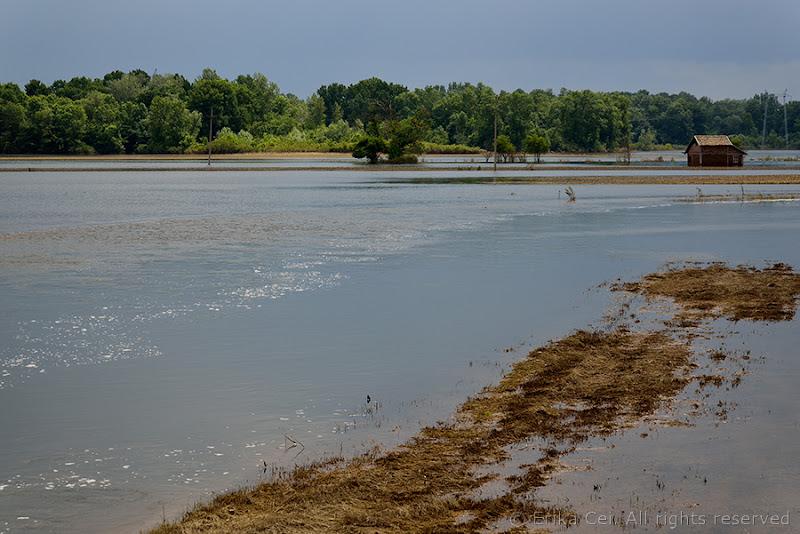 Alluvione Bijeljina sulla galena del fiume Sava