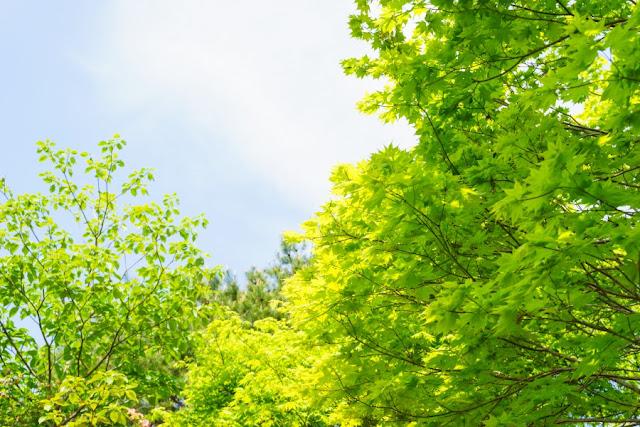 那須高原・八幡つつじ群落の新緑