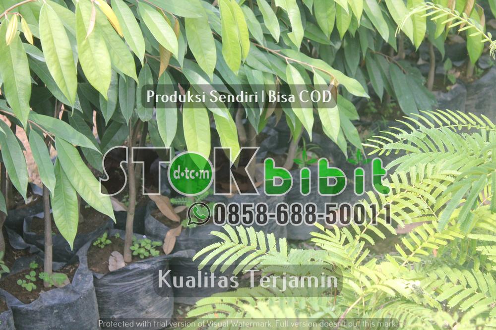 Jenis-jenis hama dan penyakit pada tanaman Alpukat    Grosir       Unggul