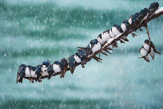 Birds, Sparrows in the winter time