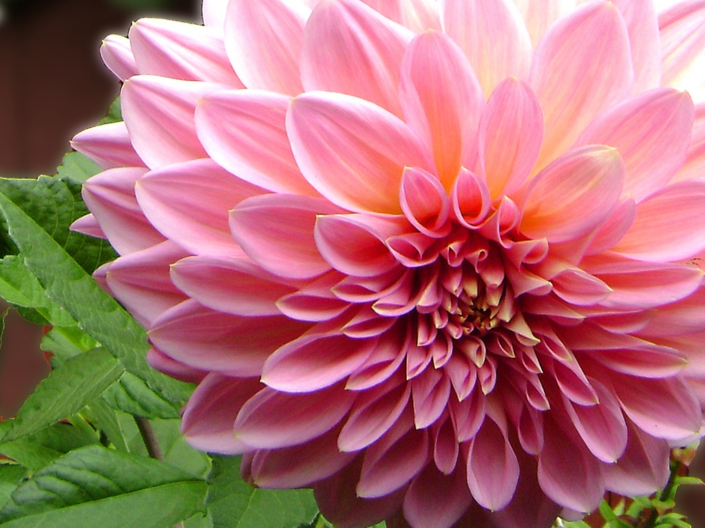 flores net worth