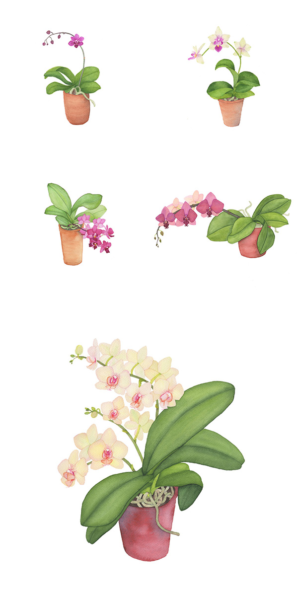 watercolor, botanical watercolor, watercolor orchids, orchid paintings, Anne Butera, My Giant Strawberry