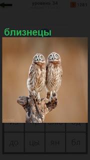 на ветке дерева сидят две совы близнецы