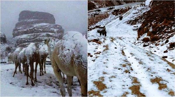 FOTOS,VIDEO: el desierto de arabia saudita se cubre de nieve.