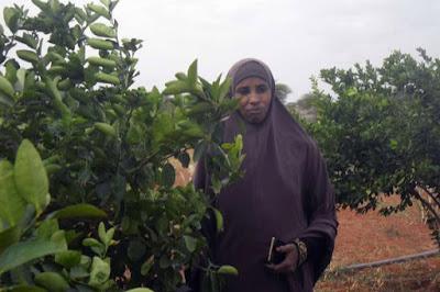 lemon farming in kenya