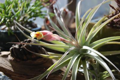Combattre les moisssures avec des plantes tropicales