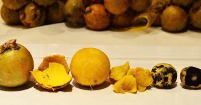 Resultado de imagem para torta residual da extração do óleo da polpa de macaúba