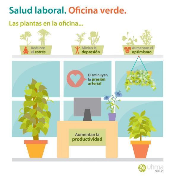 Importancia de las Plantas en el Ambiente de Trabajo u Oficina