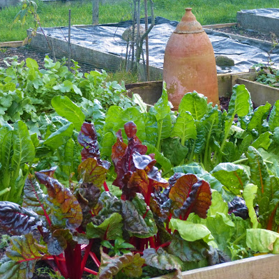 Chard, turnips etc - Grow Our Own