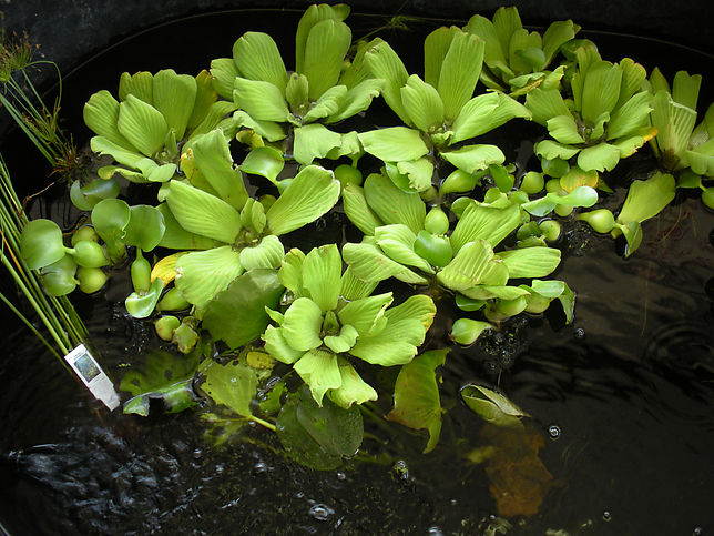 Water Plants Home Decoration