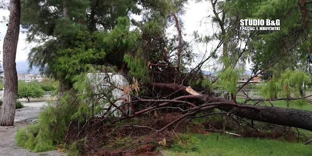 Εκατοντάδες οι πτώσεις δέντρων στην Αργολίδα