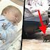 El bebé fue abandonado y estaba a punto de morir congelado – pero mira lo que hizo esta gata