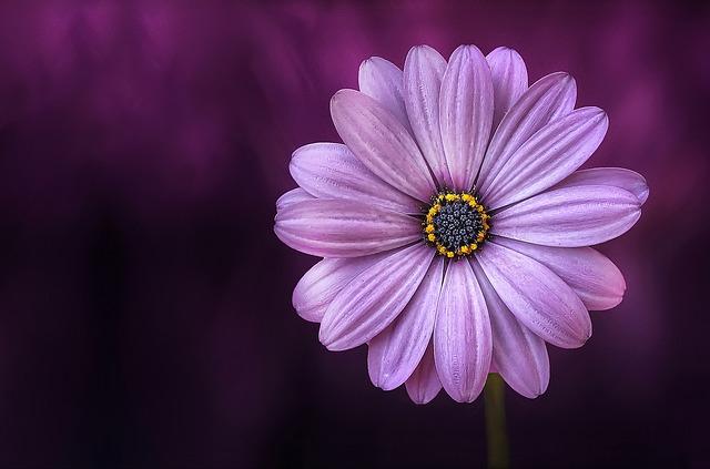 hoa đẹp nhất thế giới 9