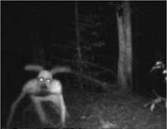 Goatman forest