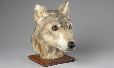 Επιστήμονες αναδημιουργούν το κεφάλι σκύλου που έζησε στη νεολιθική εποχή