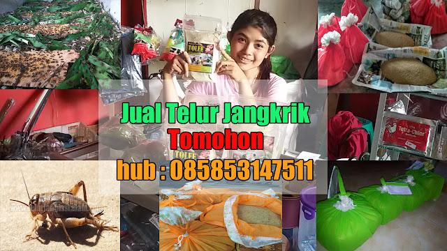 Jual Telur Jangkrik Kota Tomohon Hubungi 085853147511