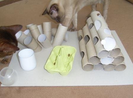 carton et chat 25