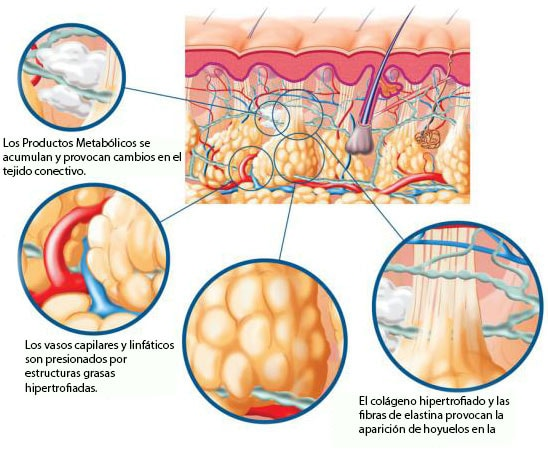 metabolicos en las celulas