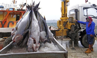 Sustainable, Seafood