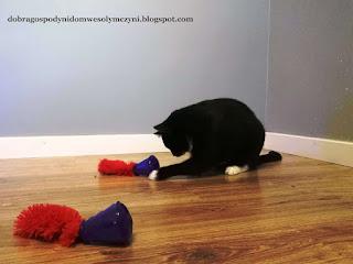 kong dla kota, kot i edukacja, jak nauczyć kota, jak uczyć kota, kot i jedzenie