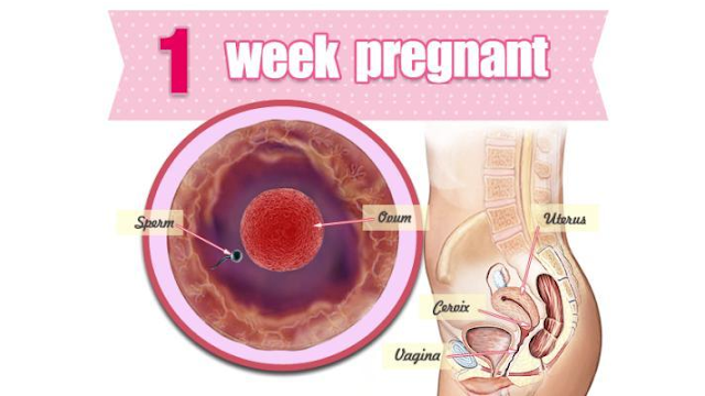 FIVE SIGNS OF FIRST WEEK PREGNANCY EVERY COUPLE MUST KNOW