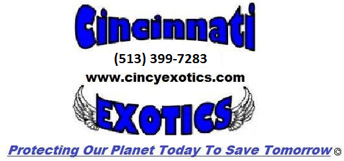 Cincy Exotics