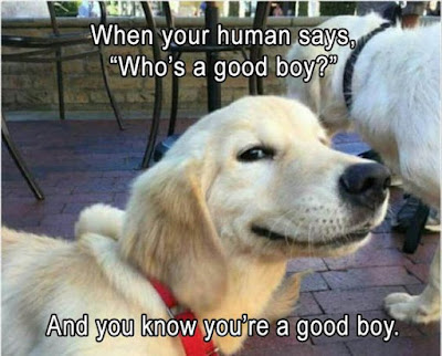 Funny Dog Humor.. Who's a good boy?