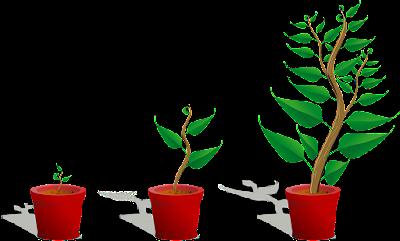 Πολλαπλασιασμός δέντρων με σπόρο