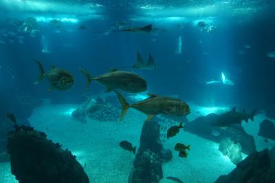 Oceanario-Parques das Naçoes-Lisbonne-Portugal