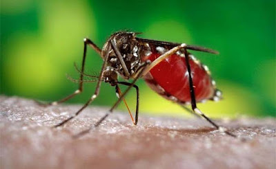 4 Cara Sederhana Mencegah Penularan Virus Zika