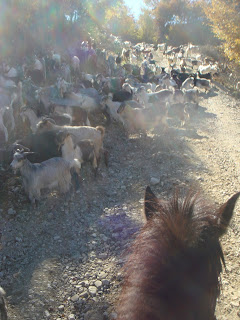 Albania, Horsexplore, Riitta reissaa