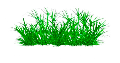 Picsart Editing Grass PNG