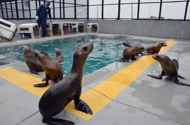 Ir com criança no Pacific Marine Mammal Center em Laguna Beach