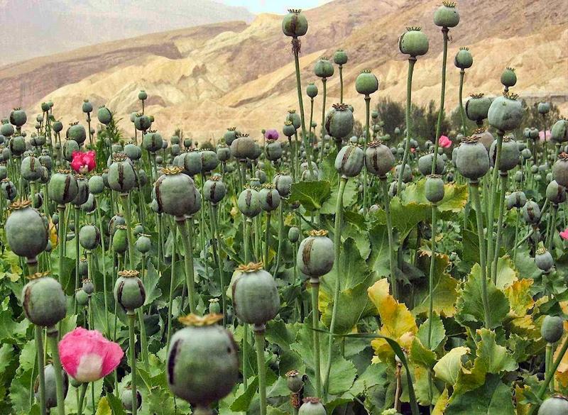 Image result for afim drug