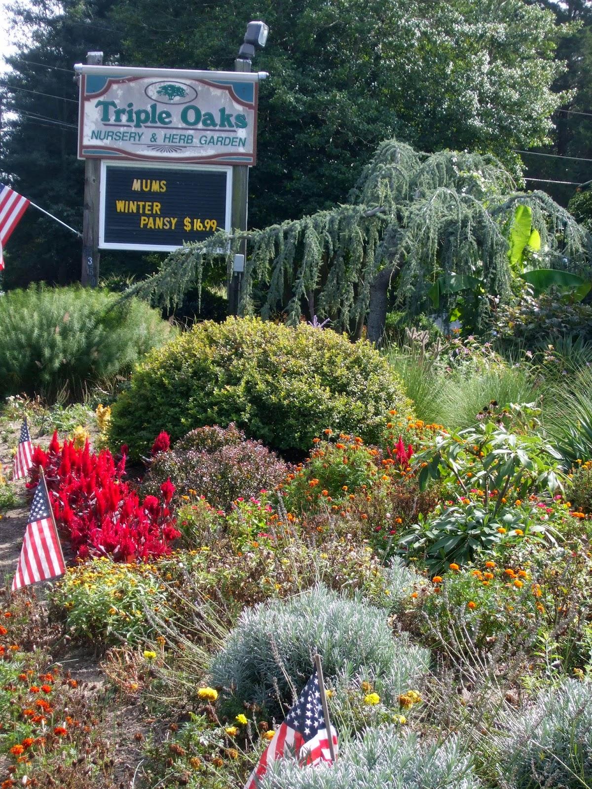 rosemary u0027s sampler triple oaks nursery u0026 herb garden nj