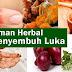 Tanaman Herbal Penyembuh Luka