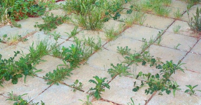 9 Most Effective Ways To Kill Weeds Naturally In Different Areas Of Your Yard