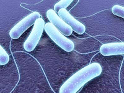 Gambar Peran Bakteri Pada Makhluk Hidup