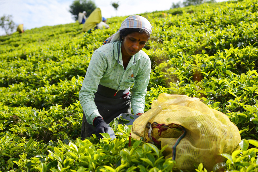 Tamilki przy pracy