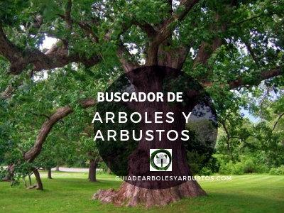 Buscar Arboles y Arbustos de Manera fácil y sencilla, guiadearbolesyarbustos.es