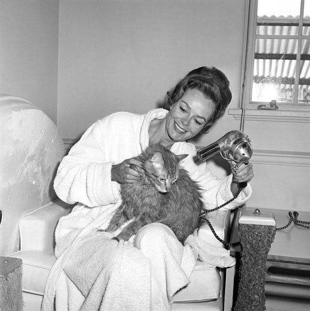 In 1963, Actress June Lockhart Taught Her Cat Named George