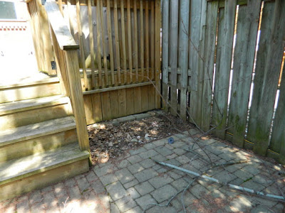 Riverdale Toronto Spring Cleanup Back Yard Before by Paul Jung Gardening Services--a Toronto Organic Gardening Company