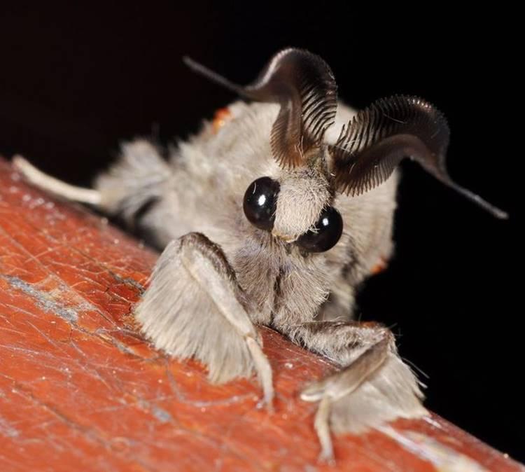 moth fluffy