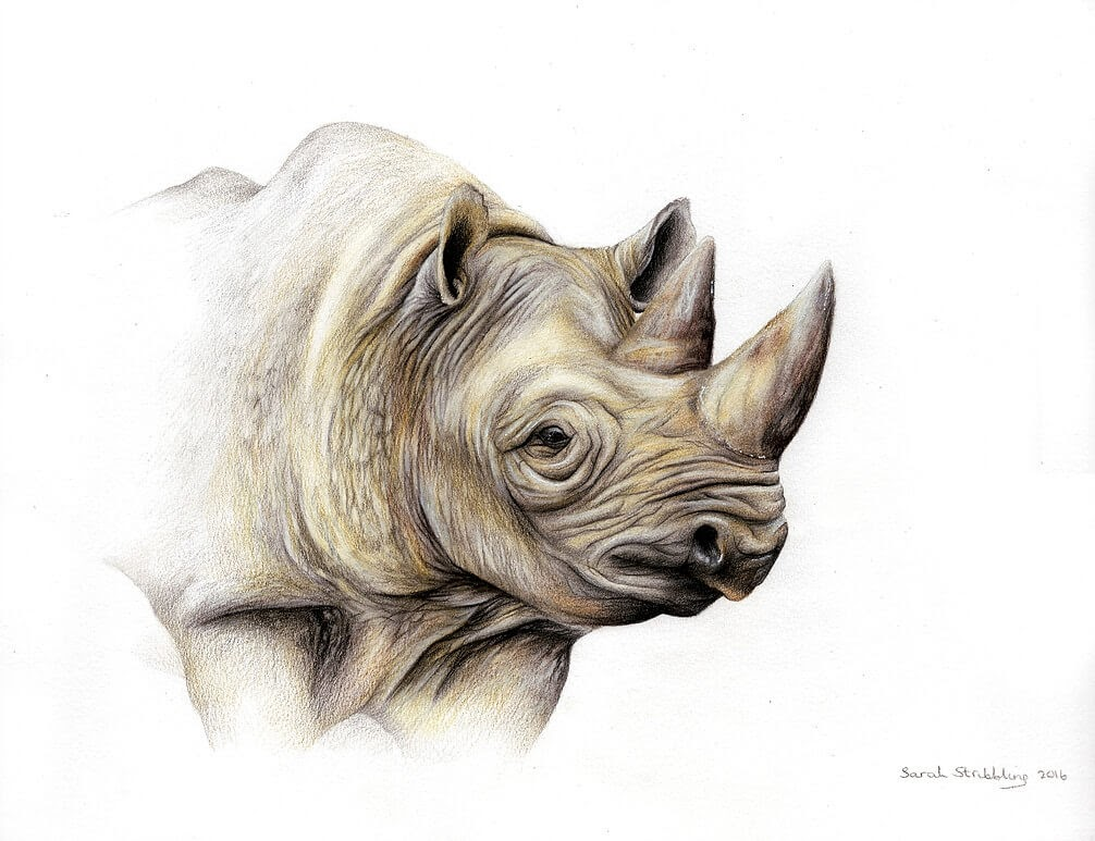 14-Rhino-Sarah-Stribbling-A-Wildlife-and-Pet-Portrait-Artist-www-designstack-co