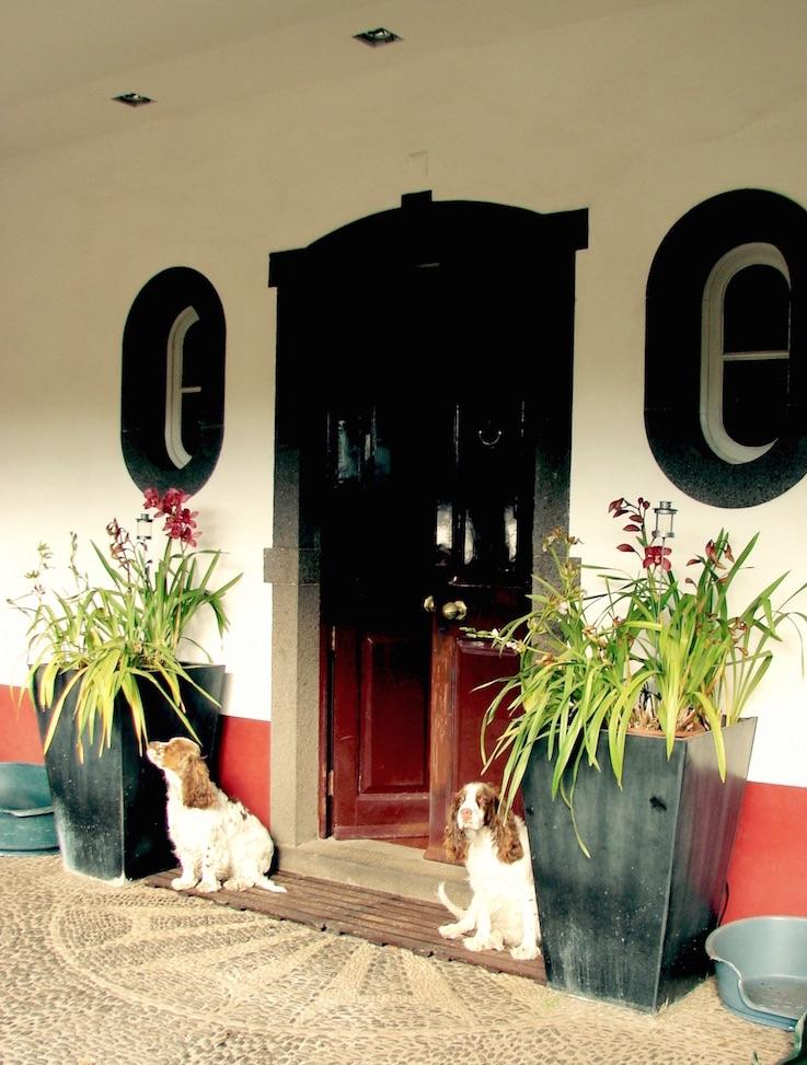 Madera, Portugalia, co zobaczyć na Maderze przewodnik