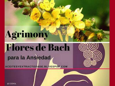 Agrimony, Flores de Bach indicado para personas que sufren de Ansiedad y no afrontan la Realidad