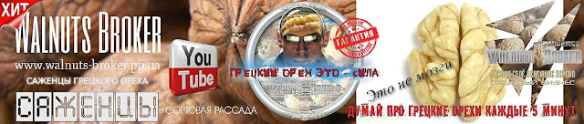 Саженцы грецкого ореха Идеал Украина, 0957351986, 0985674877, Walnuts Broker