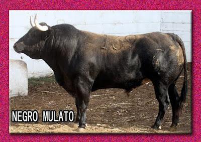 Diferentes razas de toros - Página 3 10984837_780404772076960_3019919571630510251_n