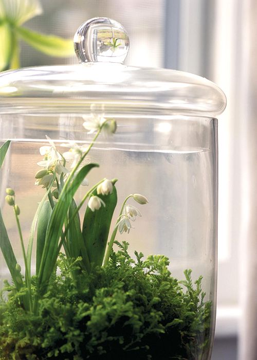 C B I D Home Decor And Design Small World Diy Terrariums